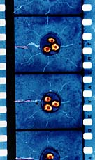 Direct Animation Film Strip