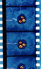 Direct Animation Film Strip