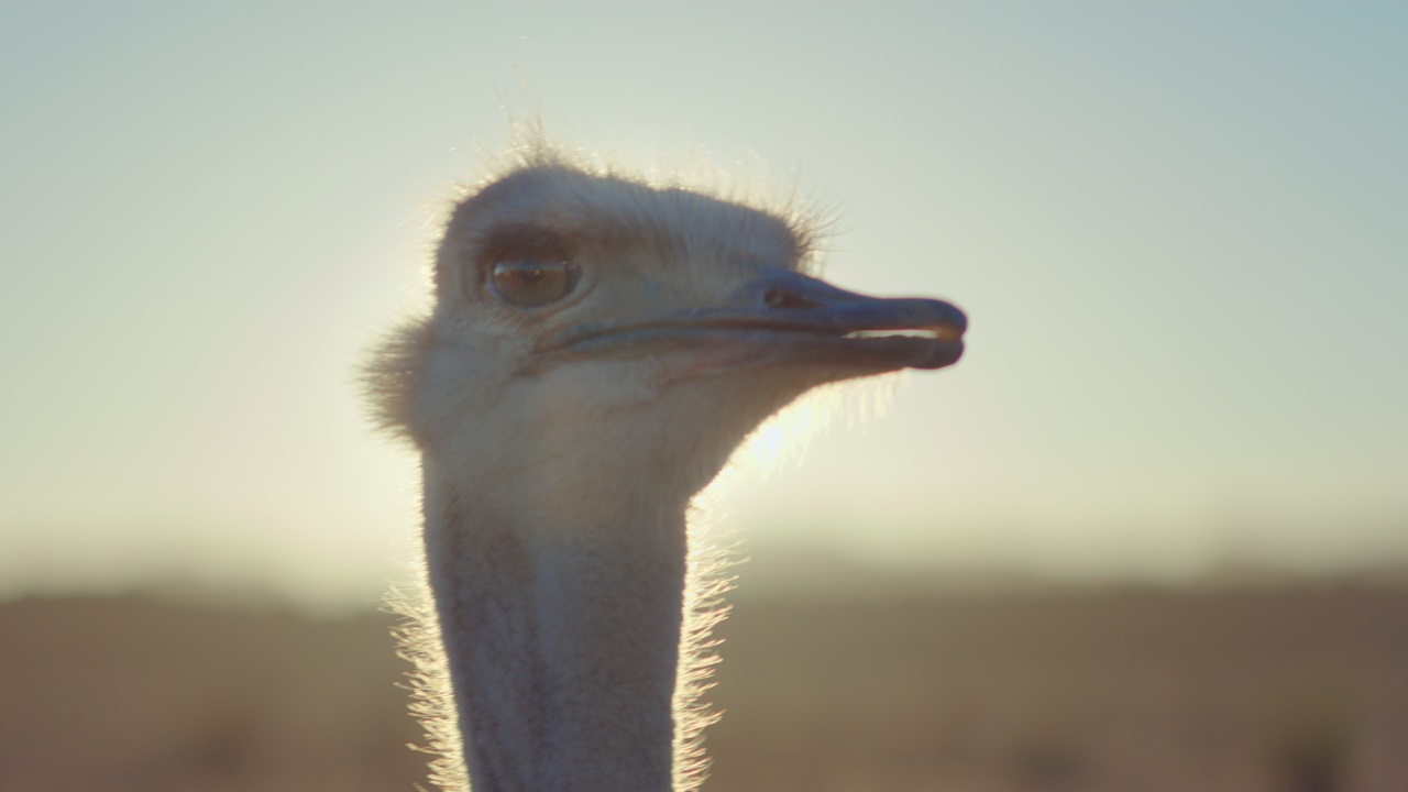mpc life delivers cg ostrich for samsung animation world network