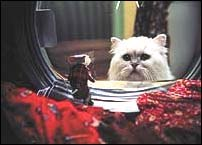 Snowball the cat, voiced by Nathan Lane, contemplates the pros and cons of saving Stuart, voiced by Michael J. Fox, from disaster in the washing machine. © Columbia Pictures.