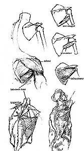 Illustration 7.
