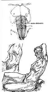 Illustration 9.