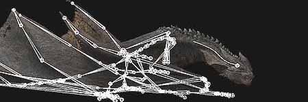 The inverse kinematics driven animation rig combined skeletal characteristics from leopards, bats and birds. The skeleton provides attachment points for the skin and muscle system.