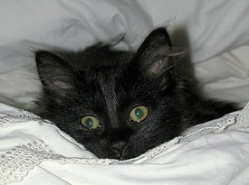 How could anyone resist crawling back into bed with this guy? © Sari Gennis.