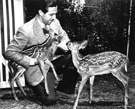 Walt Disney studied deer closely before embarking on Bambi in 1938. © Disney. All rights reserved.