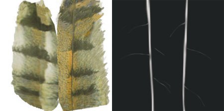 [Figures 43 & 44] Feather color textures created in Deep Paint (left). Simple bump maps for feathers (right).