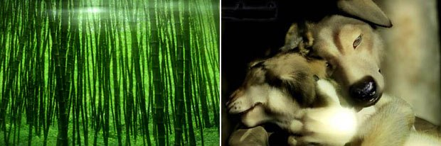 To reproduce realistic animals and landscapes in CG, Albee studied wilderness paintings.