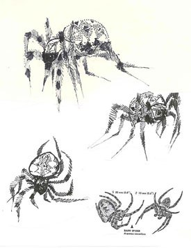 White implored Deitch to be true to Charlottes spider nature.
