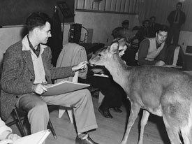 The late Frank Thomas, who was a progressive thinker when it came to the expansion of 3D CG, here, observes a deer to gain knowledge on the subtle details of the animals movements.