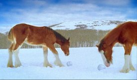 Budweisers spot with the Clydesdale snowball fight was a sequel to last years successful ad. The horses looked capable of rolling their own snowballs here. © DDB. Courtesy of Quiet Man Inc.