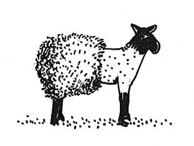 Drawing by Derek from 1980s called Sheared Lamb. Courtesy of Janet Perlman.