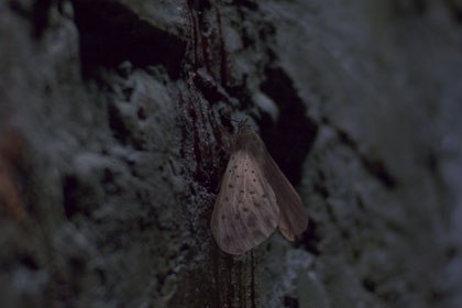 Worldwide FXs work runs the gamut from creatures to sci-fi epic sequences to very subtle cosmetic work. This is a moth the house created for In Hell. © NuImage/WWFX.