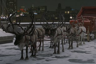 During principal photography, each live reindeer was shot and extensively photographed under flat controlled lighting conditions to provide the backbone for the fur textures and details of the antlers.