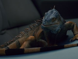 The iguana was a new challenge for Tippett. Real iguanas were brought into the studio and videotaped for reference footage.
