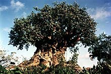 The awe-inspiring Tree of Life stands 145 feet tall and begs to be inspected more closely with hundreds of bas relief etched into the body of the tree. © 1998 Disney. All Rights Reserved.