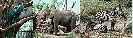 All types of animals inhabit the grounds of Disney's Animal Kingdom. Photo courtesy and © 1998 Jacquie Kubin.