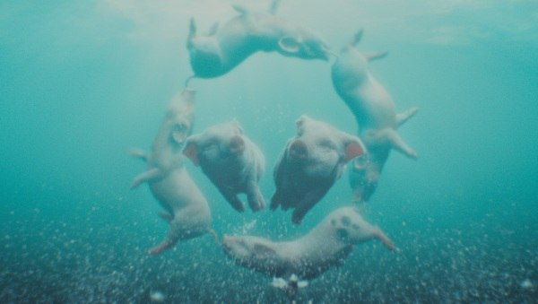If pigs could synchronize swim, they'd copy Esther Williams.