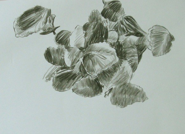 Plant (sketch) by Caroline Leaf (pencil on paper). Courtesy of the artist.