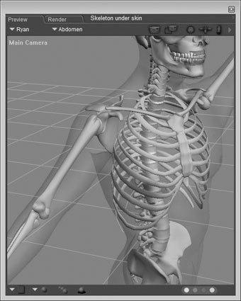 [Figure 8-17] Skeleton under semi-transparent skin