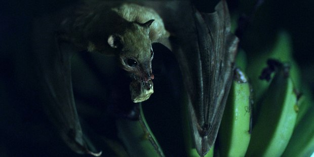 The vfx highlight was a photoreal CG bat that makes an appearance at the film's end.