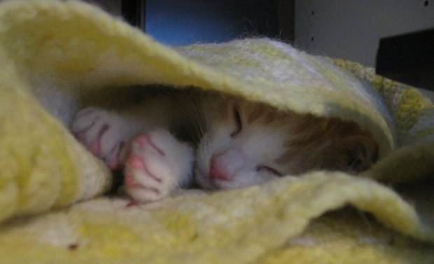 My daughter Becky's tiny new kitten, AJ, asleep inside an afghan on my desk. Every photo essay needs a picture of a kitten.
