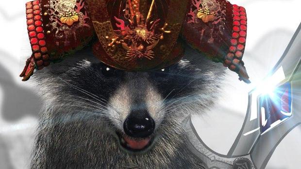 One of nature's ninja, Raccoon.