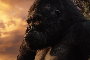 Dean Wright of Frozen Lake singled out the apes acting during close-ups in King Kong  it was full of feeling and resonated emotionally with viewers. All King Kong images: Weta Digital Ltd./Universal Studios.