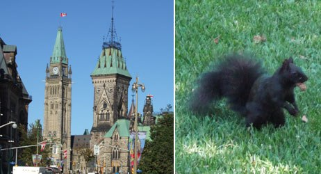 Beautiful downtown Ottawa and the elusive black squirrel. All images courtesy of Rick DeMott.