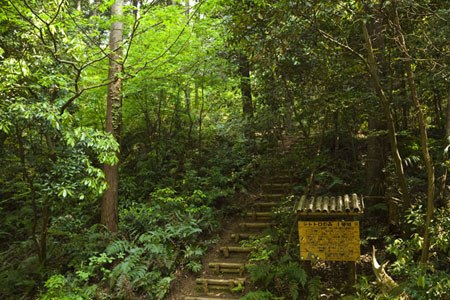 The inspirational Sayama Forest in Tokyo needs your help.