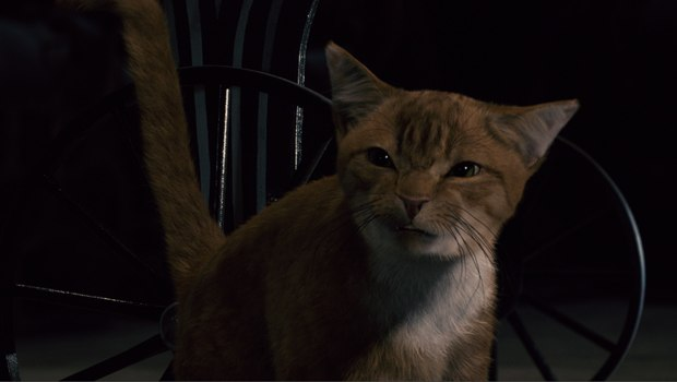 Tippett Studio was tasked with creating Azrael from a mix of CG and a live-action cat.
