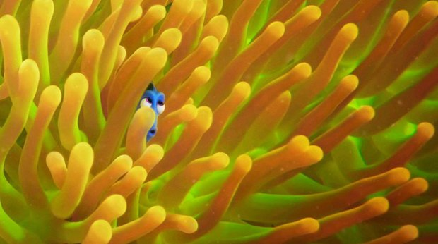 New Posters Unveiled for Pixar's 'Finding Dory'