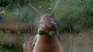Framestore Creates Sheldon the Snail for Freesat