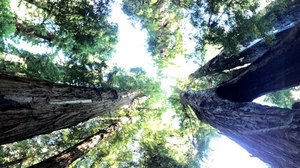 Mysteries Entombed within the Redwoods Realm: Part 1