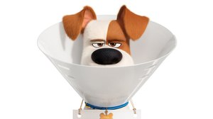 WATCH: First Trailer Arrives for Illumination's 'Secret Life of Pets 2'