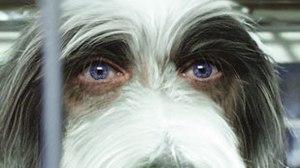 'The Shaggy Dog': Tippett Studio Barks Up VFX