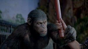 Weta Digital Monkey Business