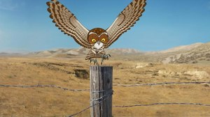 Titmouse Releases 'Owl' Into the Wild