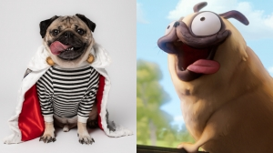 Doug the Pug Boards Lord and Millers' 'Connected'