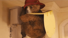 Colin Firth Drops Out as Voice of 'Paddington'