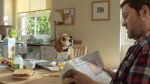 Finish Creates CG-Animated Dog for New Beagle Street Campaign