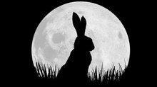 Netflix, BBC Announce Voice Cast for 'Watership Down' Miniseries