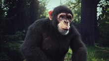 TUTORIAL: Create a Photoreal Chimpanzee Using 3ds Max, ZBrush and V-Ray