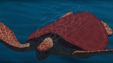 Studio Ghibli Unveils New Trailer for 'The Red Turtle'