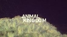 Sarofsky Delivers Main Titles for TNT's 'Animal Kingdom'