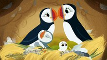 Superights Announces New Sales for Cartoon Saloon's 'Puffin Rock'