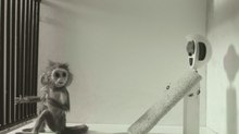 Pictures from the Brainbox: A Weekly Dose of Indie Animation - 'Monkey Love Experiments'