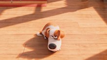 Illumination Drops Louis C.K. from 'The Secret Life of Pets' Sequel