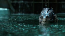 Image Gallery: Mr. X Dives into 'The Shape of Water'