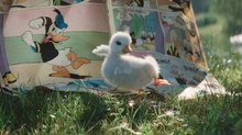 Disneyland Paris Warms Hearts with Adorable Ad, 'The Little Duck'