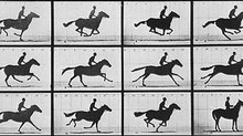A Brief History of the Animated Horse